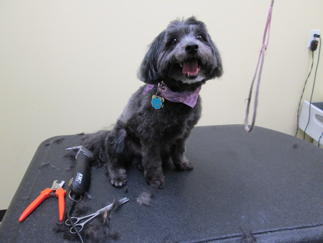 Dog Grooming Bristol Ct